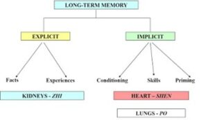 long-term_memory